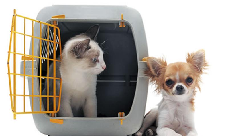 Cachorro e gato na gaiola de transporte