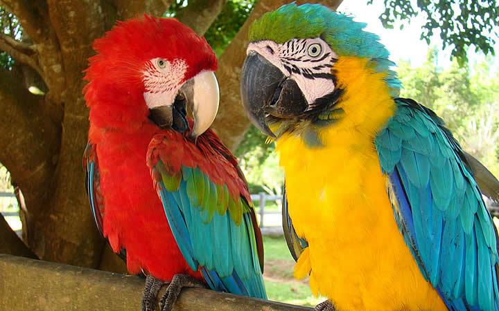 Animais silvestres - Pantanal