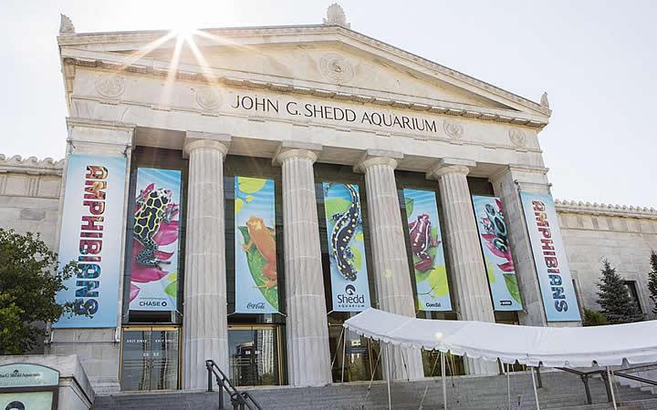 Aquário de Chicago - Shedd Aquarium