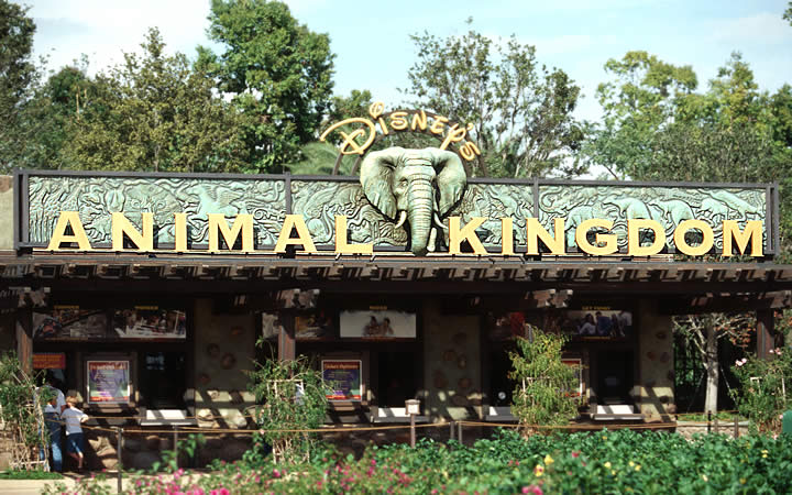 Animal Kingdom - Orlando