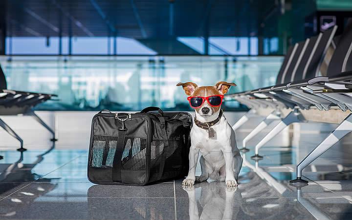 Cachorro indo viajar