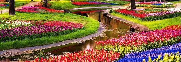 Flores Holambra