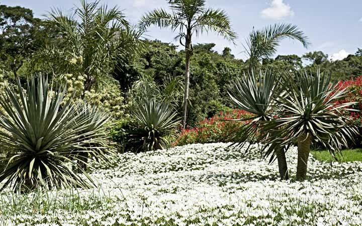 Jardim Botânico - Inhotim