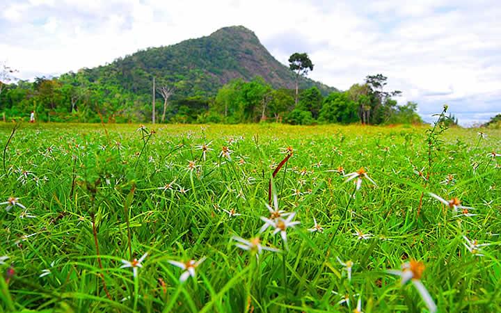 Monte Pascoal - Bahia
