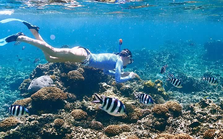 Snorkel - Seychelles