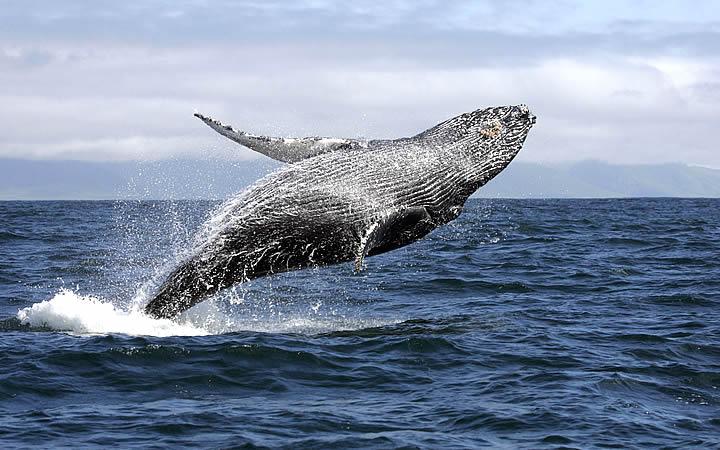 Baleias em Abrolhos - BA