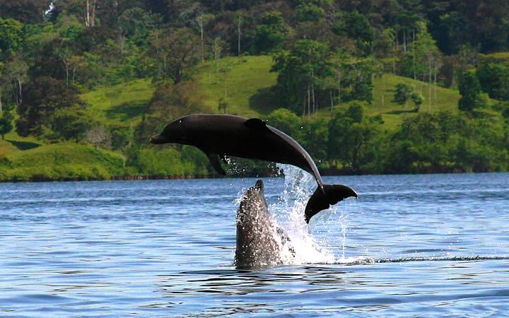 Golfinhos na Bahia de Los Delfines - Panamá