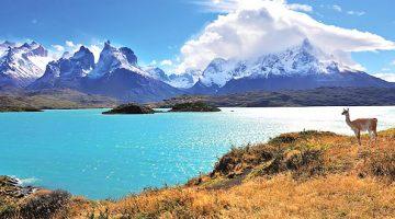 Guanaco no Parque Nacional Torres del Paine Chile