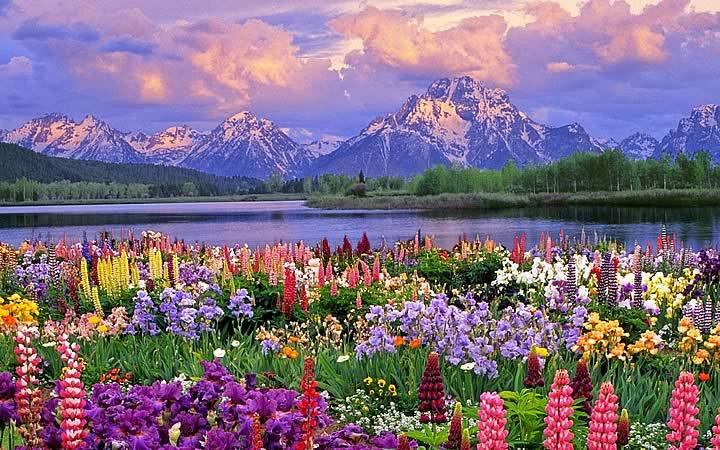 Primavera - Cordilheira dos Andes - Chile