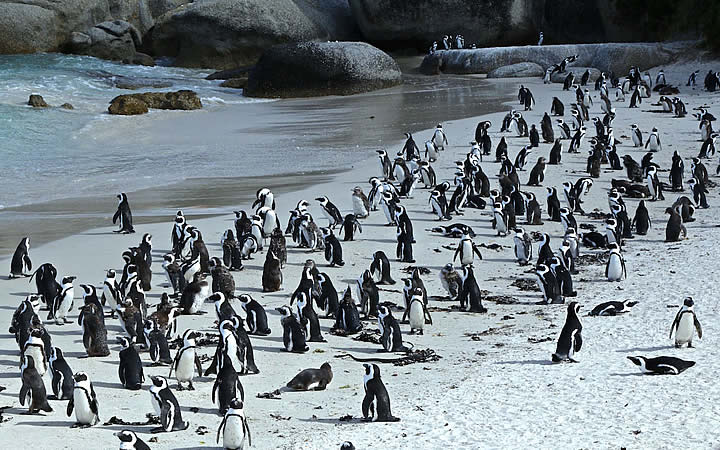 Boulders Beach - Cidada do cabo