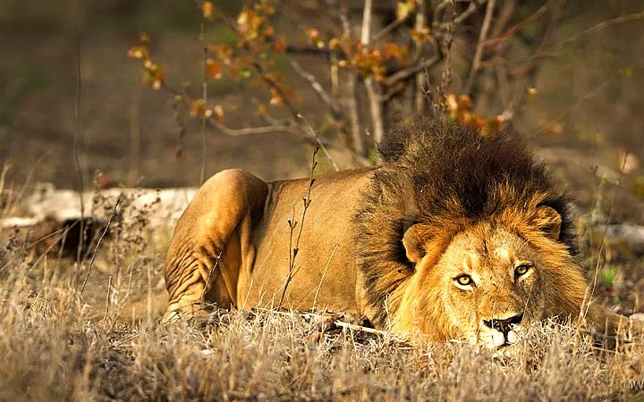 Parque Nacional Kruger em Joanesburgo
