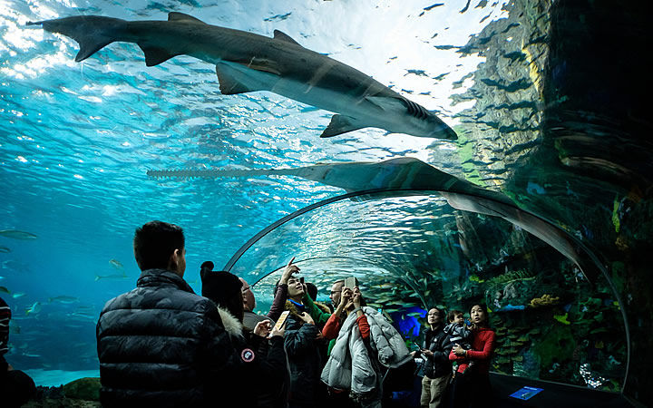 Ripley's Aquarium of Canada - Toronto