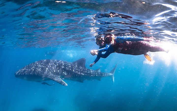 Mergulho com tubarão