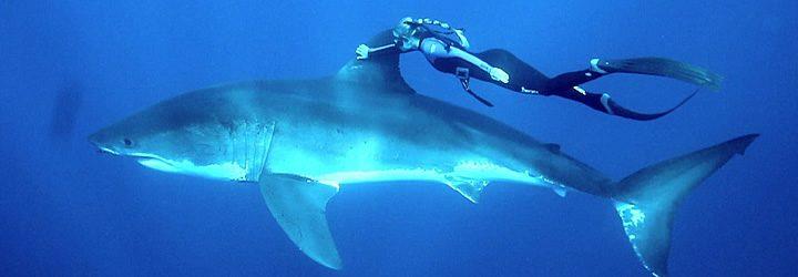 Mulher nadando com tubarão