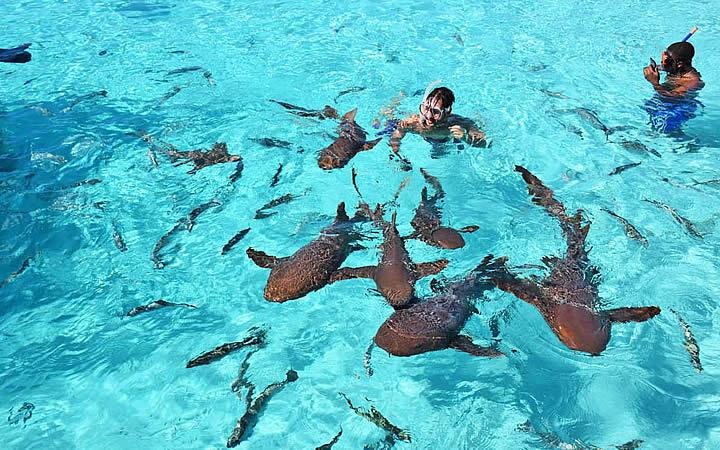Nadando com tubarões em Bahamas