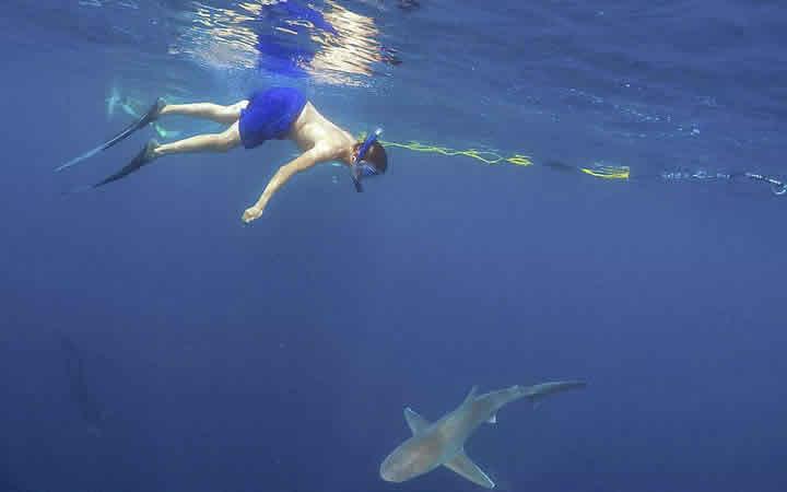 Nandando com tubarões - Havaí