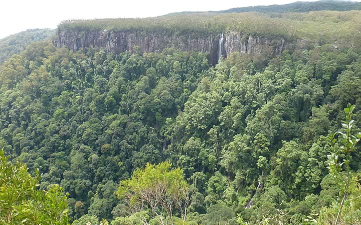 Springbrook National Park em Brisbane