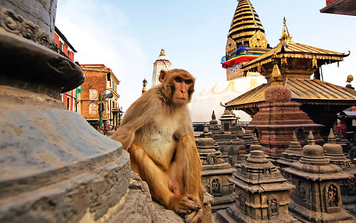 Templo dos Macacos - Nepal