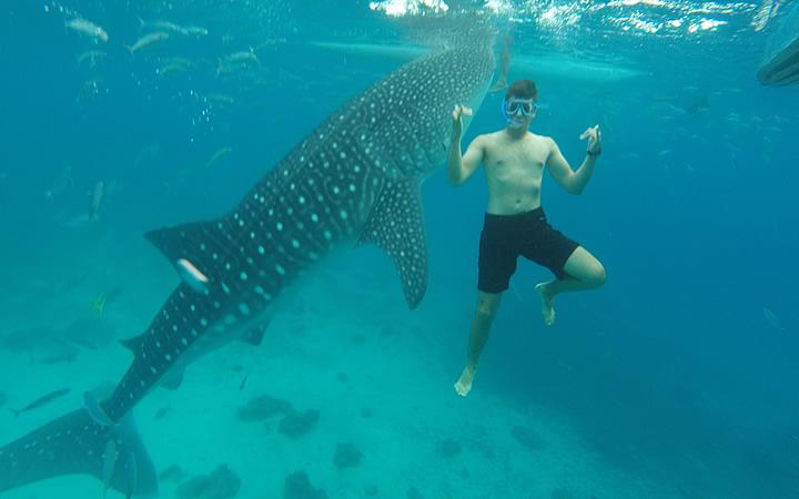 Mergulhar com tubarões-baleia