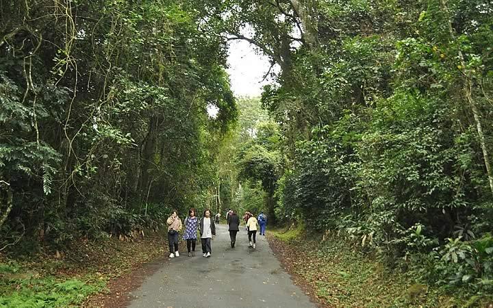 Parque Estadual Serra da Cantareira