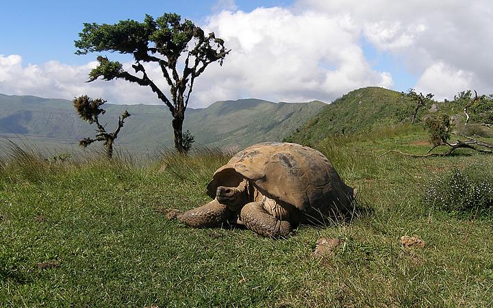 Parque Nacional de Galápagos