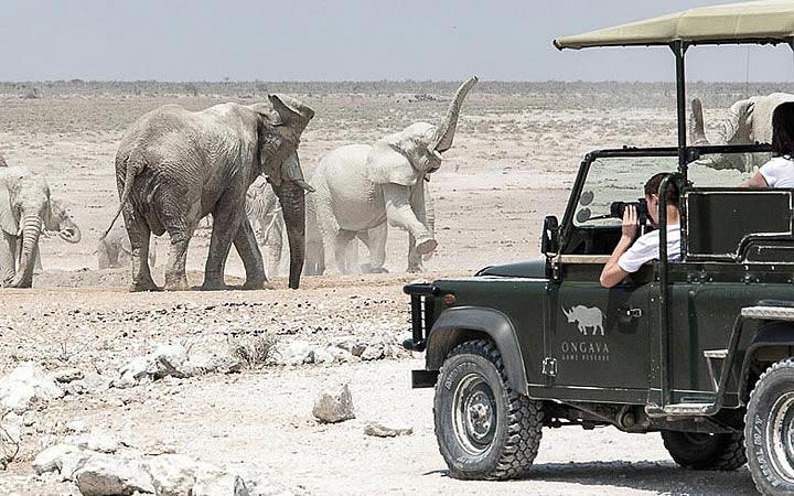 Pessoas vendo elefantes em Namíbia