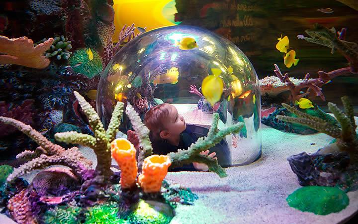 Sea Life Aquarium - Kansas City
