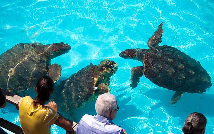 Tartarugas do Projeto Tamar em Florianópolis