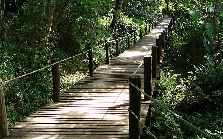Trilha na Ilha de Porto Belo
