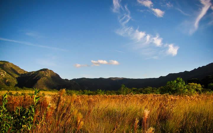 Vegetação Parque Serra do Cipó