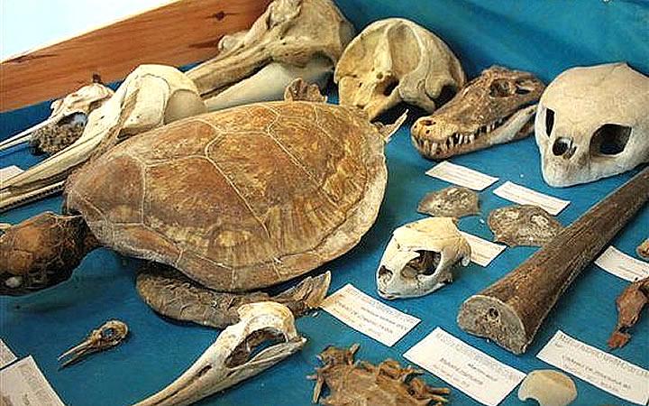Museu e aquário do mar de Bombinhas