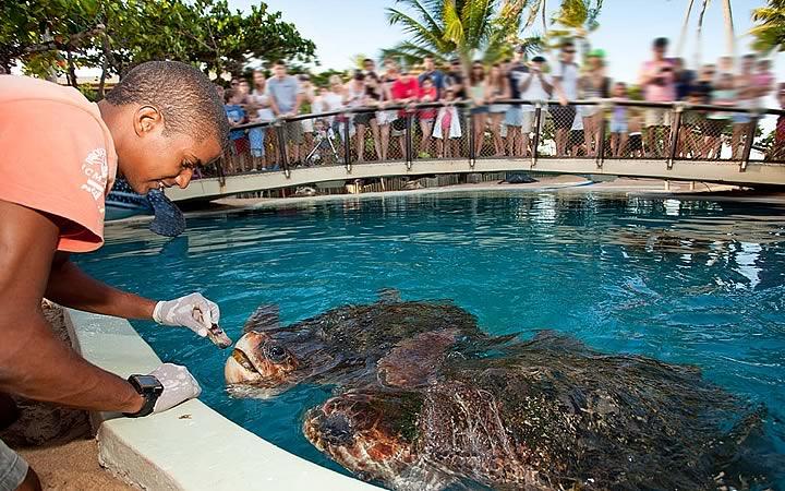 Tartarugas do projeto Tamar da Praia do Forte