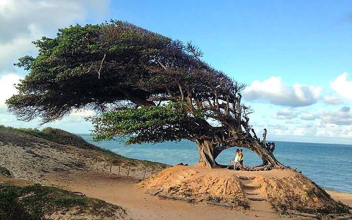 Duas pessoas em baixo da árvore na Praia Maxaranguape