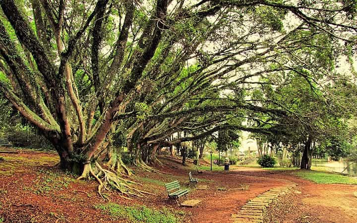 Banco em baixo de árvores grandes no Parque Municipal Edmundo Zanoni