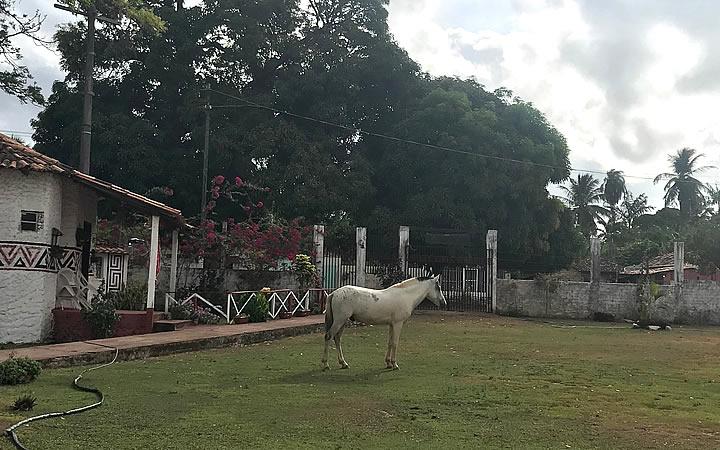 Cavalo no quintal da Pousada Marajoara