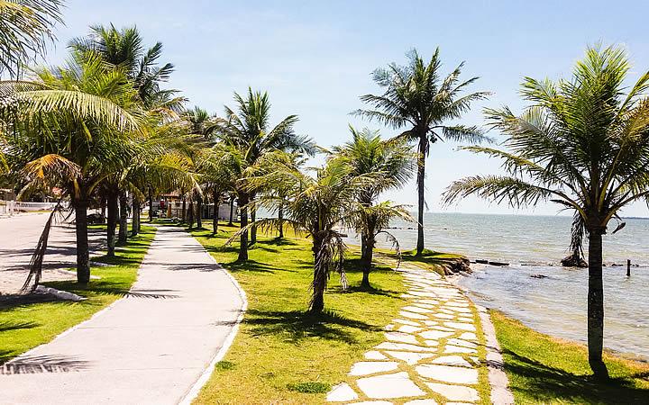 Coqueiros na Praia da Pontinha em Araruama