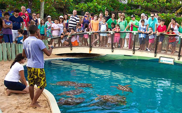 Pessoas assistindo as tartarugas do projeto Tamar na Praia do forte