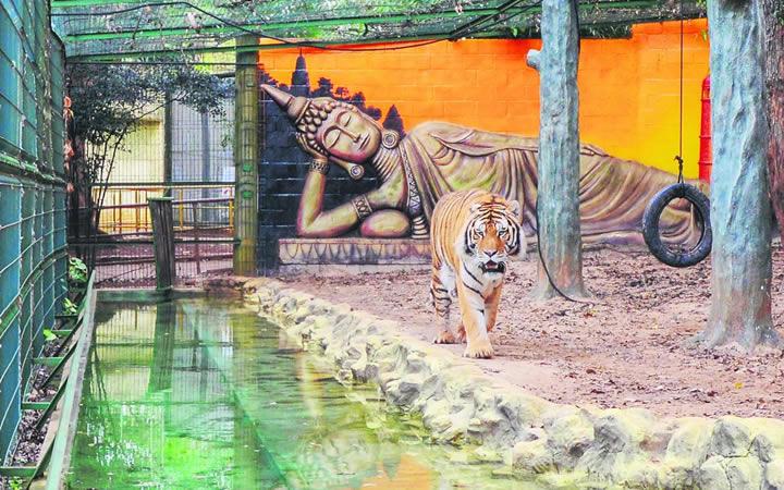 Tigre no Zoológico de Piracicaba
