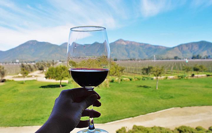 Pessoa segurando taça de vinho