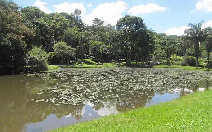 Lago da Linfeias Jardim Botânico