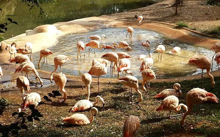 Animais no Zoológico de São Paulo