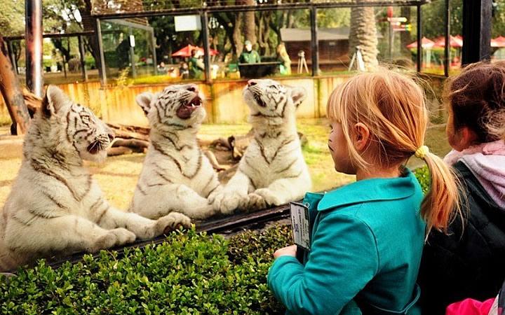 Crianças no Zoológico de Buenos Aires - Bairro Palermo