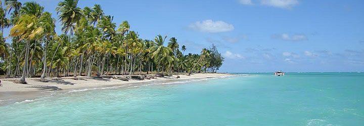 Coqueiros na Praia de Antunes