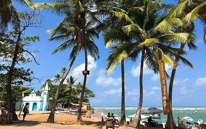 Coqueiros na Praia do Forte