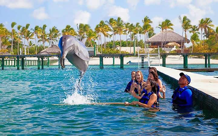 Golfinho pulando em Punta Cana
