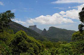 Área verde no Parque Nacional da Tijuca