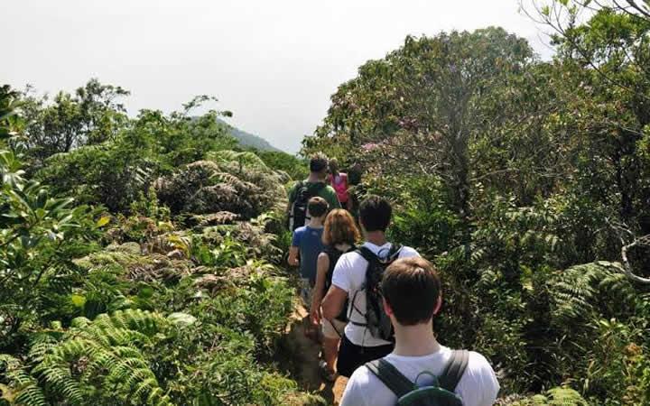 Grupo fazendo caminhada no Parque Nacional da Tijuca