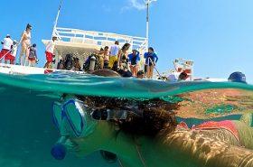 Mulher mergulhando - Manoa Park