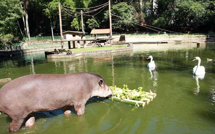 Bosque dos Jequitibás - Lago com animais