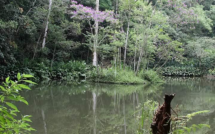 Açude da Solidãona Floresta da Tijuca